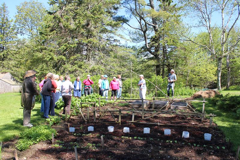 Crop Rotation and DIY  Organic Pest Control – Workshop and Garden Tour