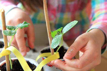 IEM Spring and Summer Garden Workshop Schedule