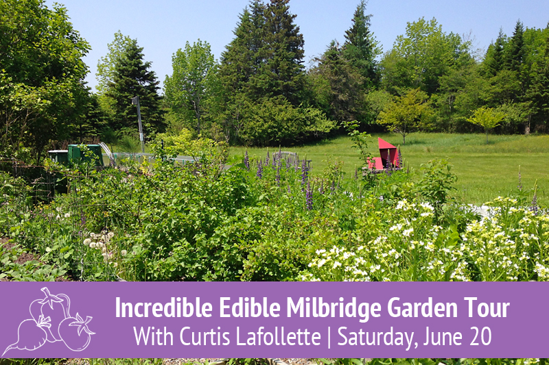 Incredible Edible Milbridge Vegetable Garden Tour with Curtis Lafollette