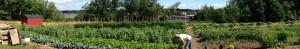 Incredible Edible Milbridge Market Garden at the Red Barn