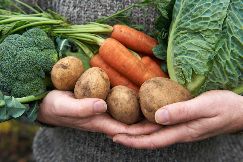 Learn to Grow Veggies with Your Own Master Gardener Mentor through Incredible Edible Milbridge
