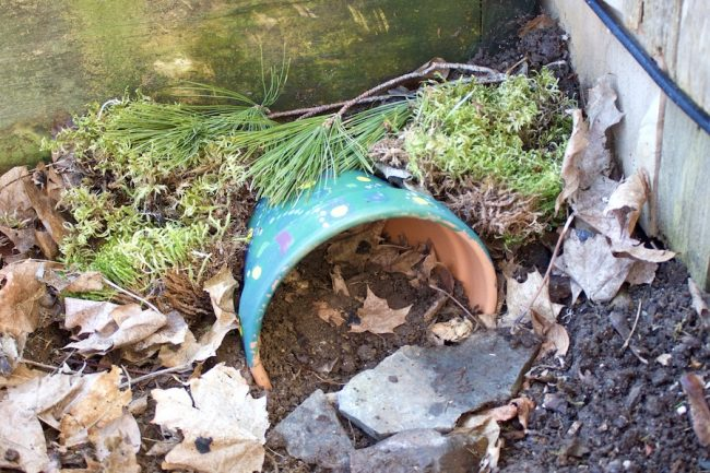 A toad house