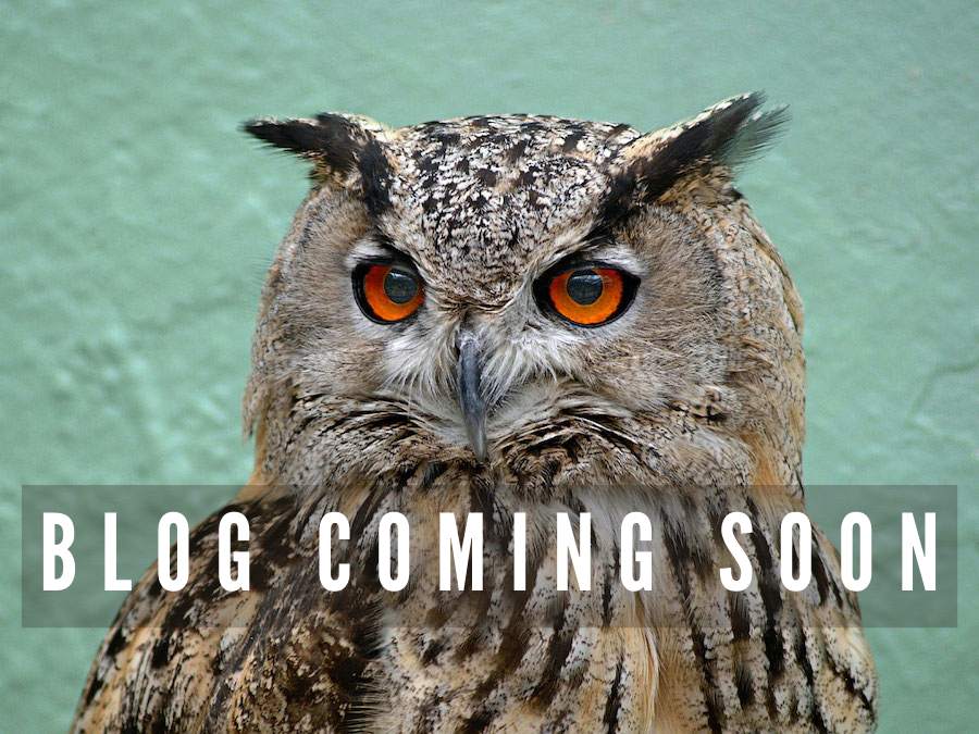 "OWL with words ""Blog Coming Soon"" over its neck"
