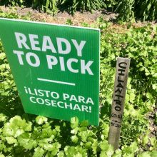 Ready to Pick Garden Sign