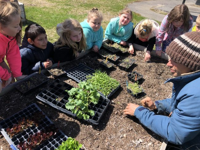 Class of children sitting around a tray of lettuce seedlings
