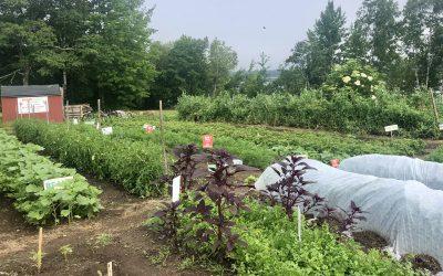 July – Incredible Edible Milbridge Update