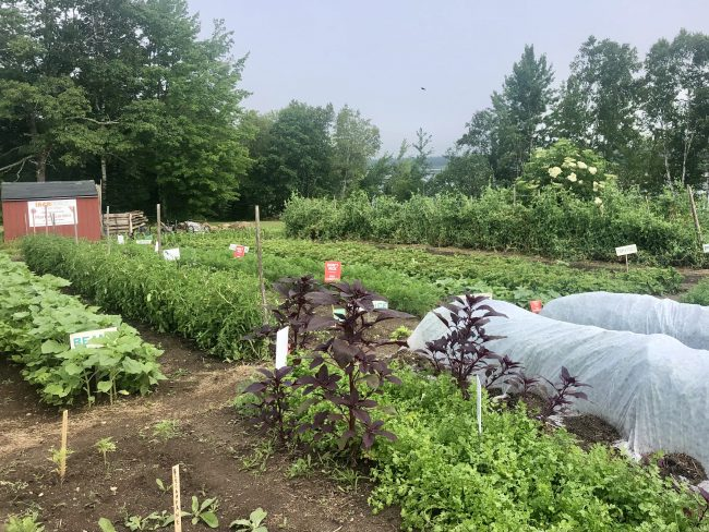 Photo of the Garden at the Red Barn Motel
