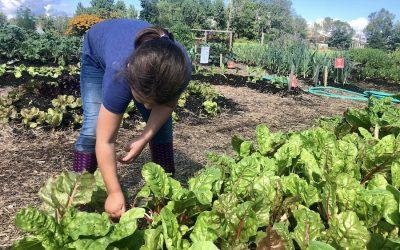 Incredible Edible Milbridge Report – August