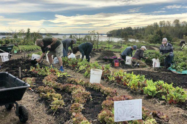 Volunteers working in the garden